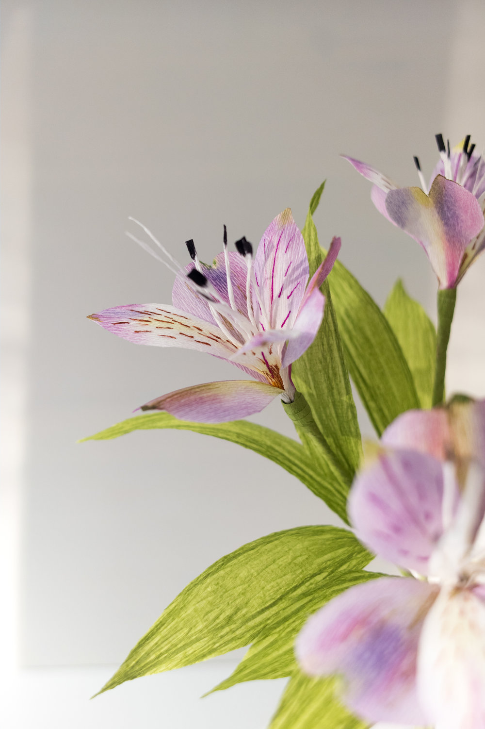 Paper Rose Co. Alstroemeria