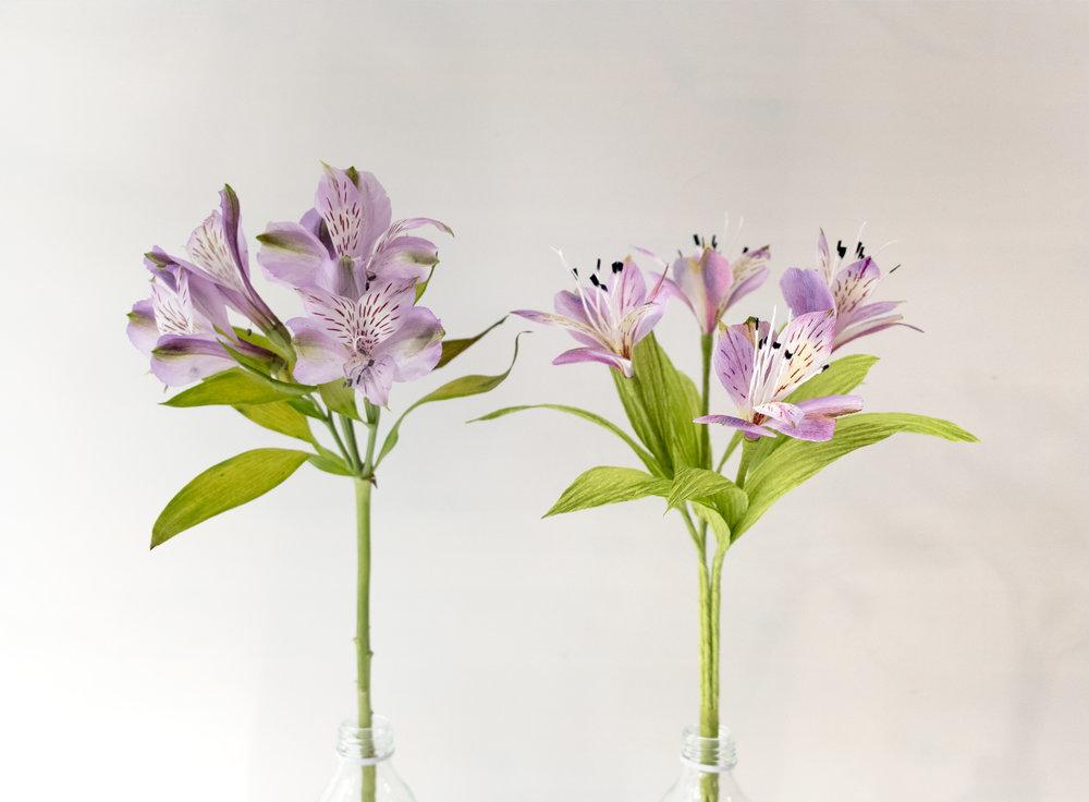 Alstroemeria Study Paper Rose Co.jpg