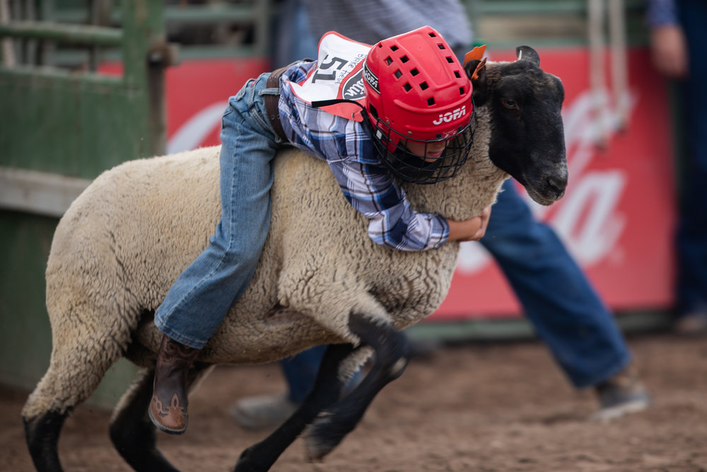 Blake Field kicks off the third night of the Ogden Pioneer Days Rodeo with Mutton Busting sheep riding on Saturday, July 21, 2018.