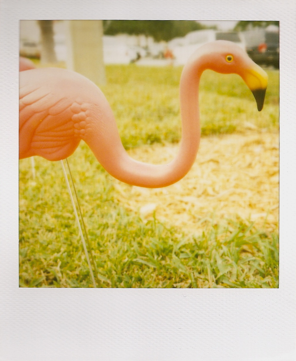 polaroid flamingo.jpeg
