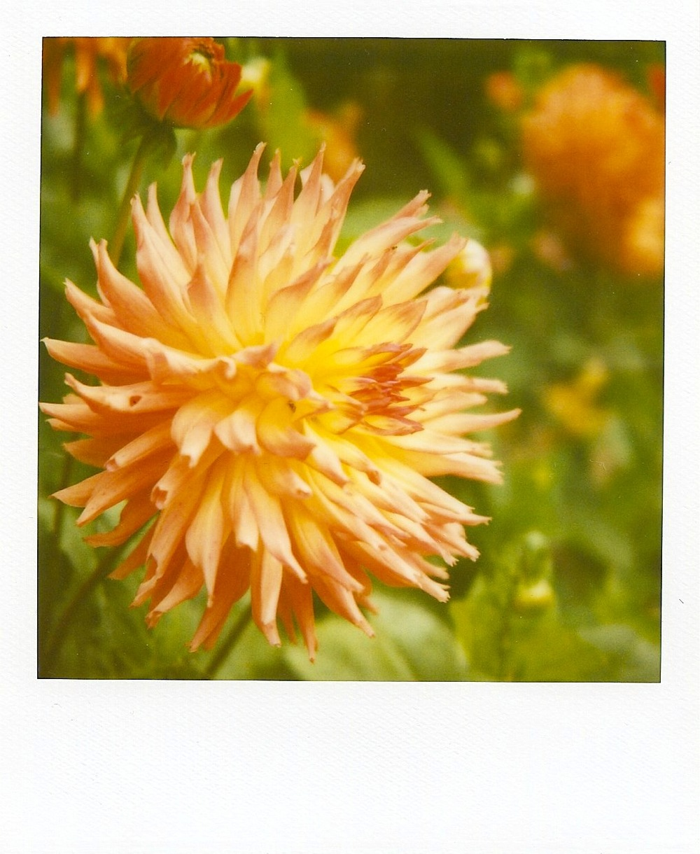 polaroid flower.jpeg