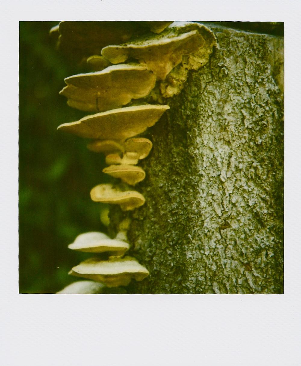 polaroid mushroom_2.jpeg
