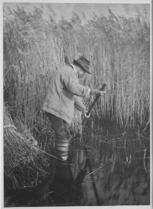 Peter Henry Emerson,  A Reed Cutter at Work , 1885, from  P.H. Emerson's Life and Landscape on the Norfolk Broads , platinum print, Jude Peterson Collection.