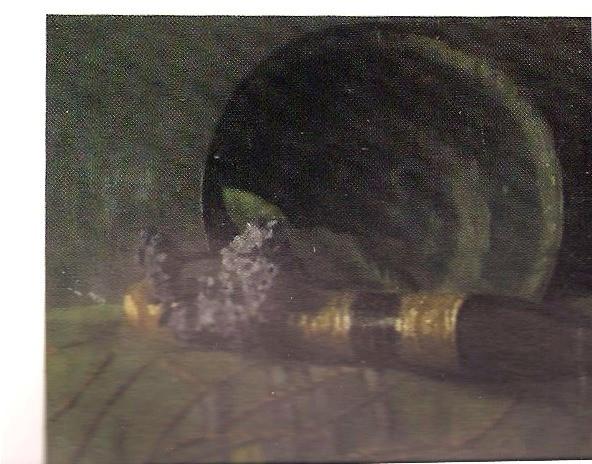 oil canvas2.jpg