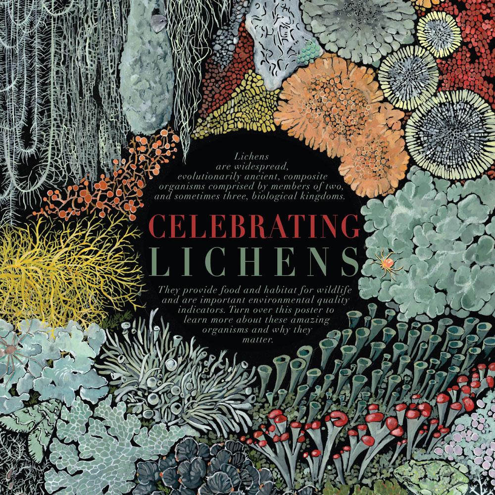 lichens-sm.jpg