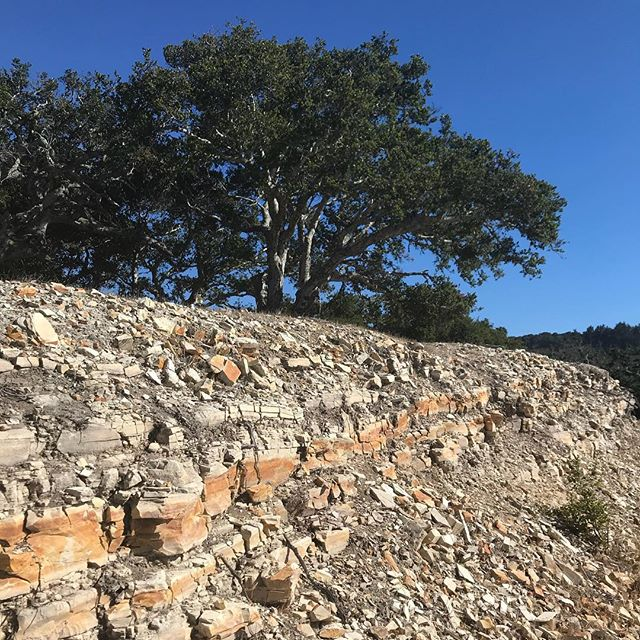 Impossible to match the beauty of the existing oaks and Carmel stone in Tehama..........
