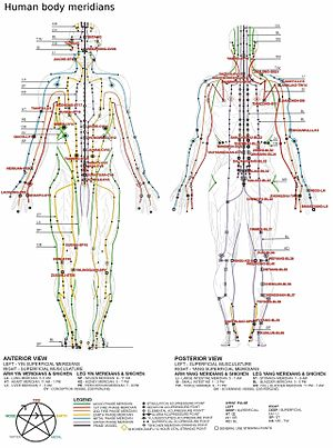 According to traditional Chinese medicine, a form of bodily energy called chi is generated in internal organs and systems. This energy combines with breath and circulates throughout the body, forming paths called meridians.    source  http://www.healthy.net/health/article/scientific_evidence_in_support_of_acupuncture_and_meridian_theory_i_introduction/1087