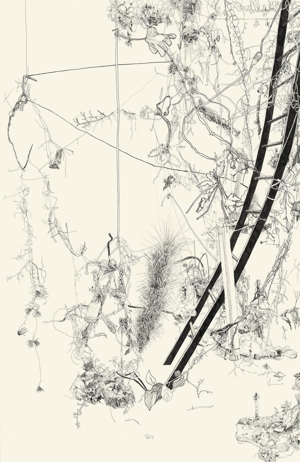 understory_drawing.jpg