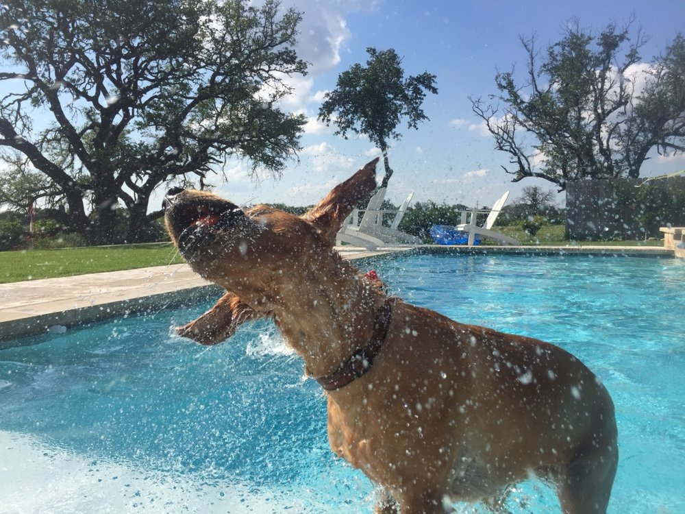 He loves to swim!