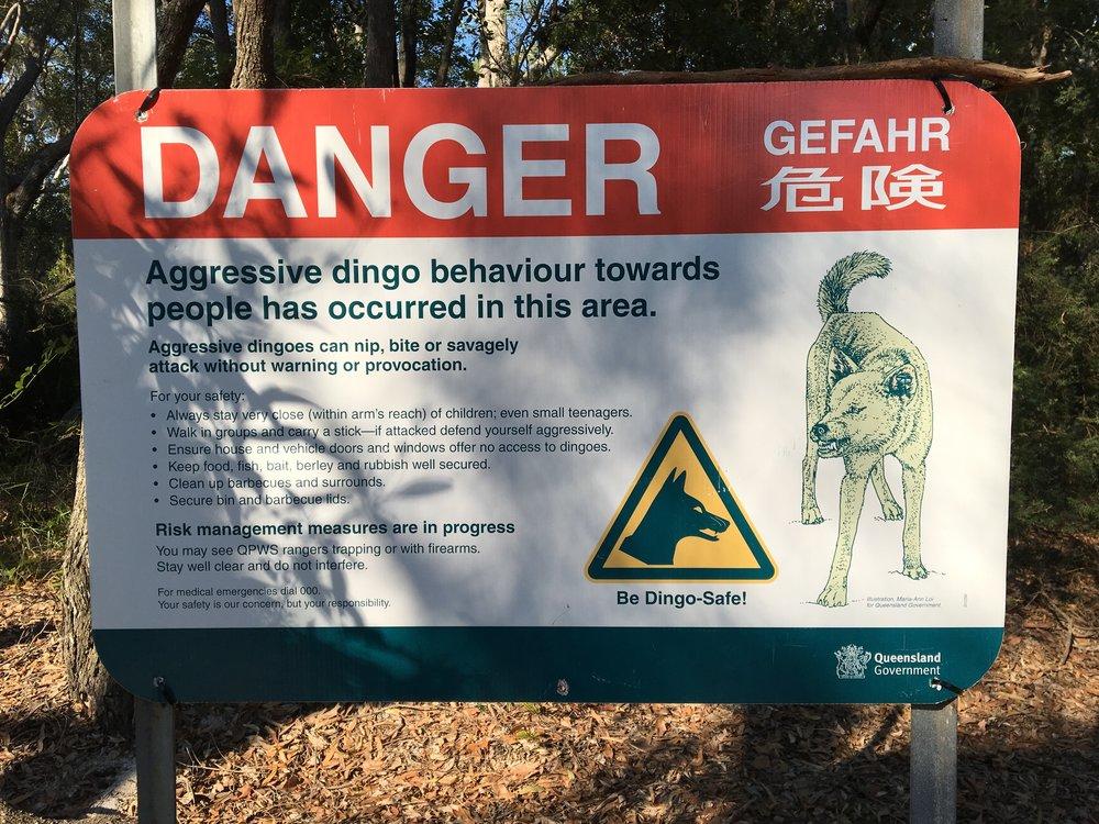 Stay Dingo Safe