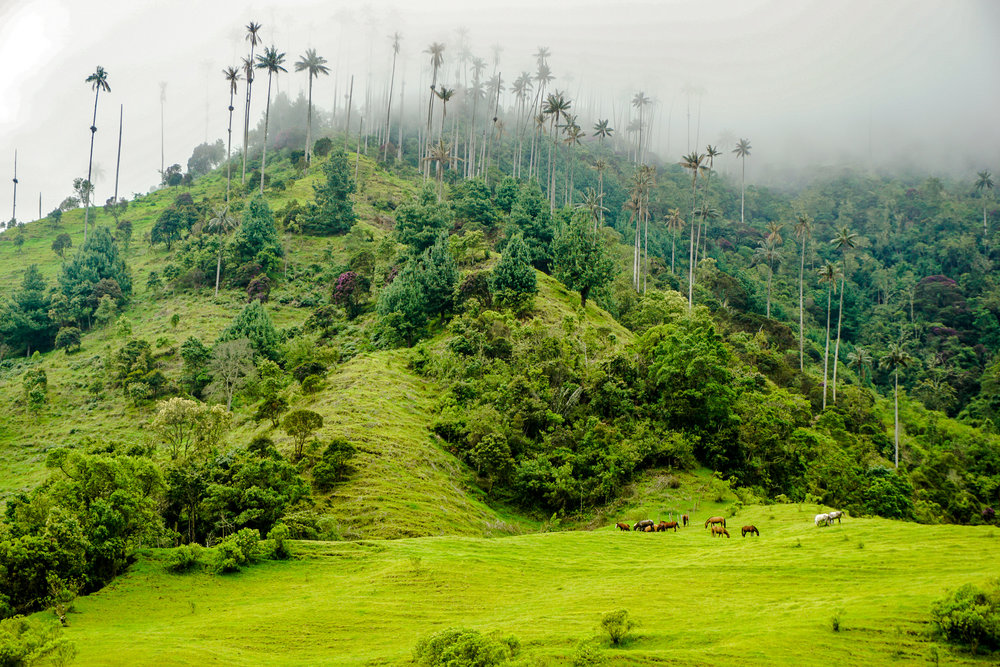 Copy of Cocora Valley