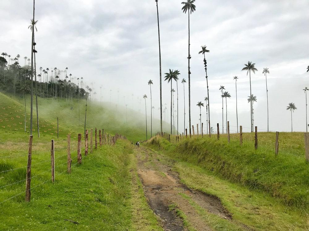 Salento Cocora Valley.jpg
