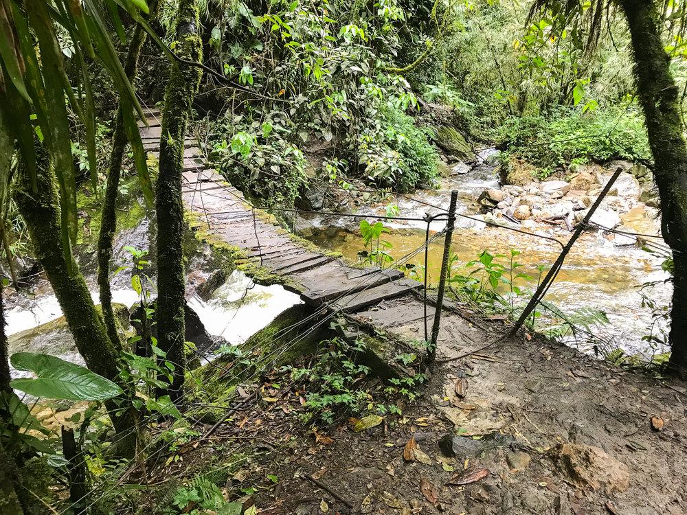 Bridge Cocora valley trek.jpg