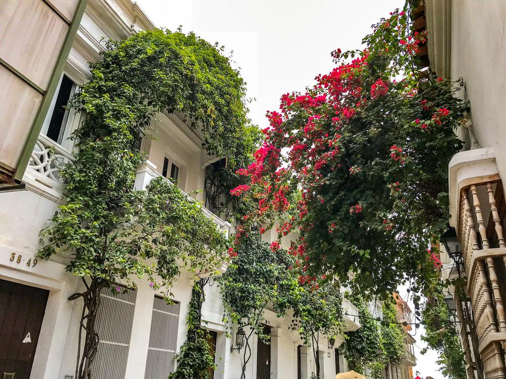 Cartagena plants.jpg