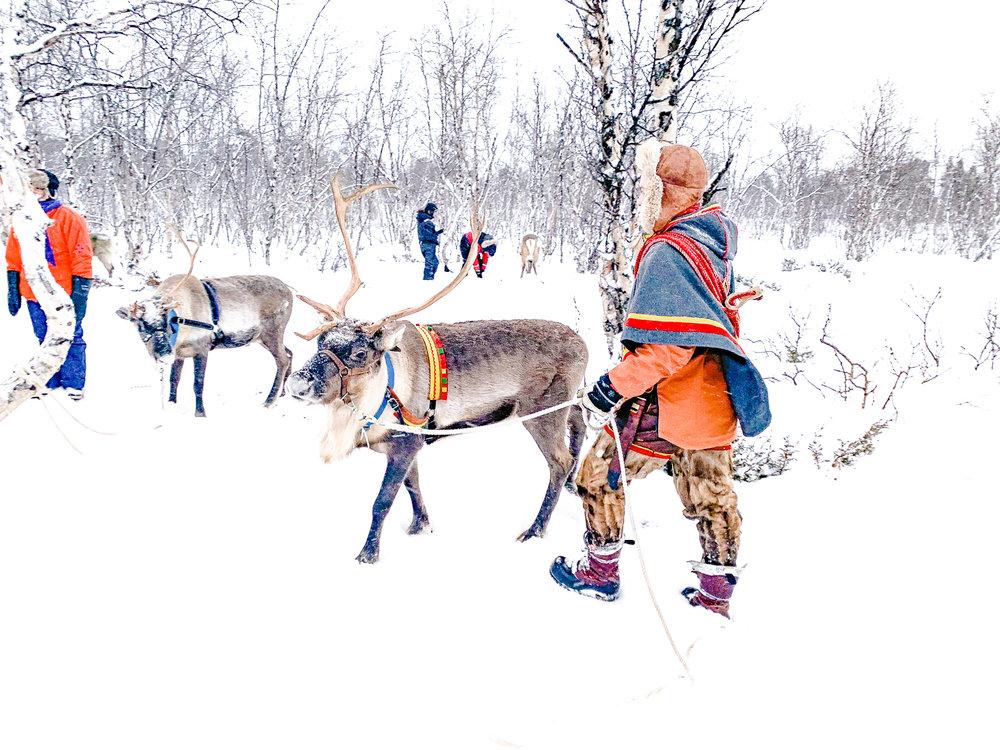 reindeer-day-kiruna.jpg