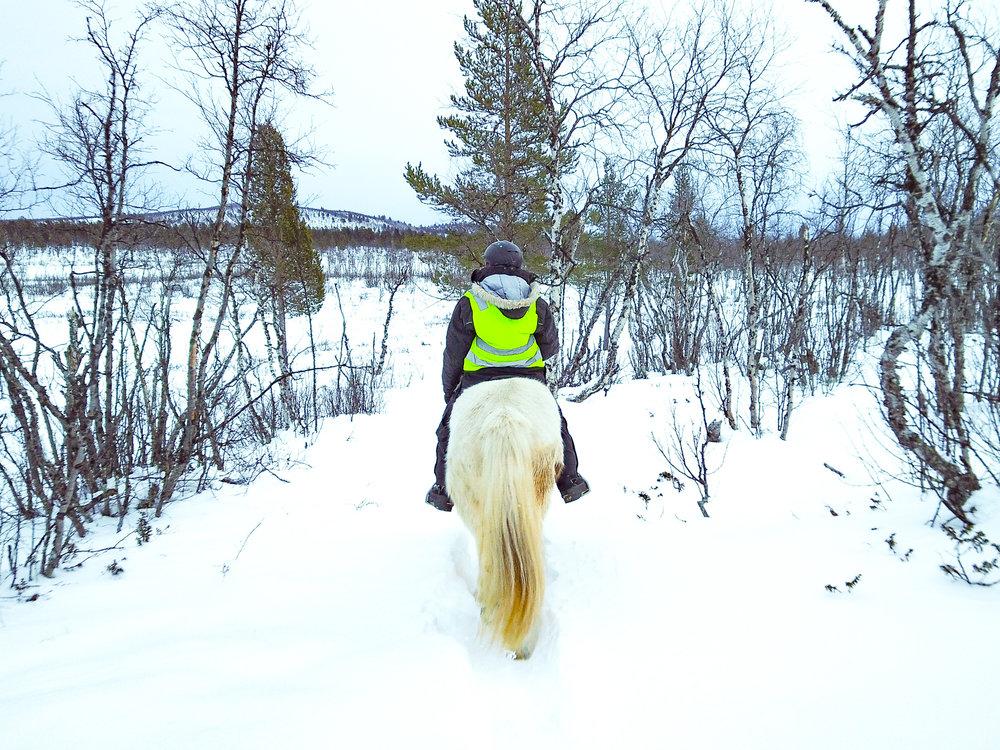 Horseback riding on a moose safari