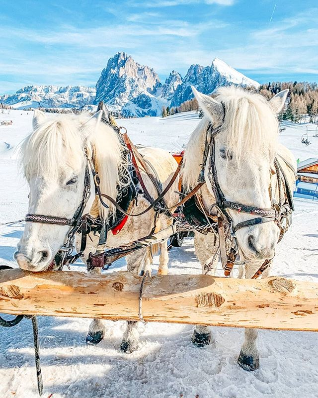 I shot this image on the Seiser Alm, it's a Dolomite plateau and the largest high-altitude Alpine meadow in Europe. It is a major tourist attraction, notably for skiing and hiking, but the also offer those very romantic horse-drawn carriages through the beautiful winter landscape 🏔️🐴 #seiseralm #dolomites #dolomitesunesco #südtirol #southtyrol