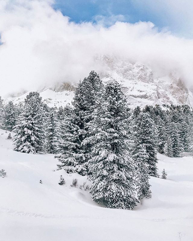 My favorite view - snow-covered trees 🌲❄️ #dolomites #dolomitesunesco #visitsouthtyrol