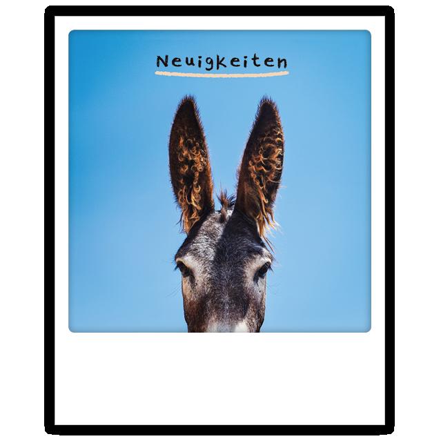 """Postkarte """"Neuigkeiten Esel"""" von PICKMOTION"""