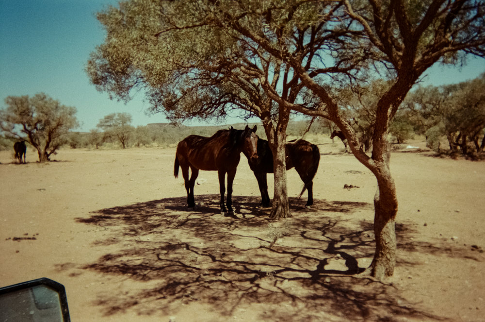 Horses (taken by a participant) near the Santa Teresa community some 100km outside of Alice Springs