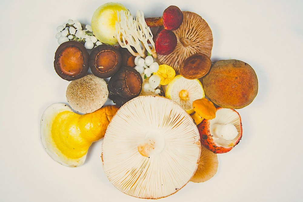 Mushroom Mash-up: Timothy Dykes, Unsplash