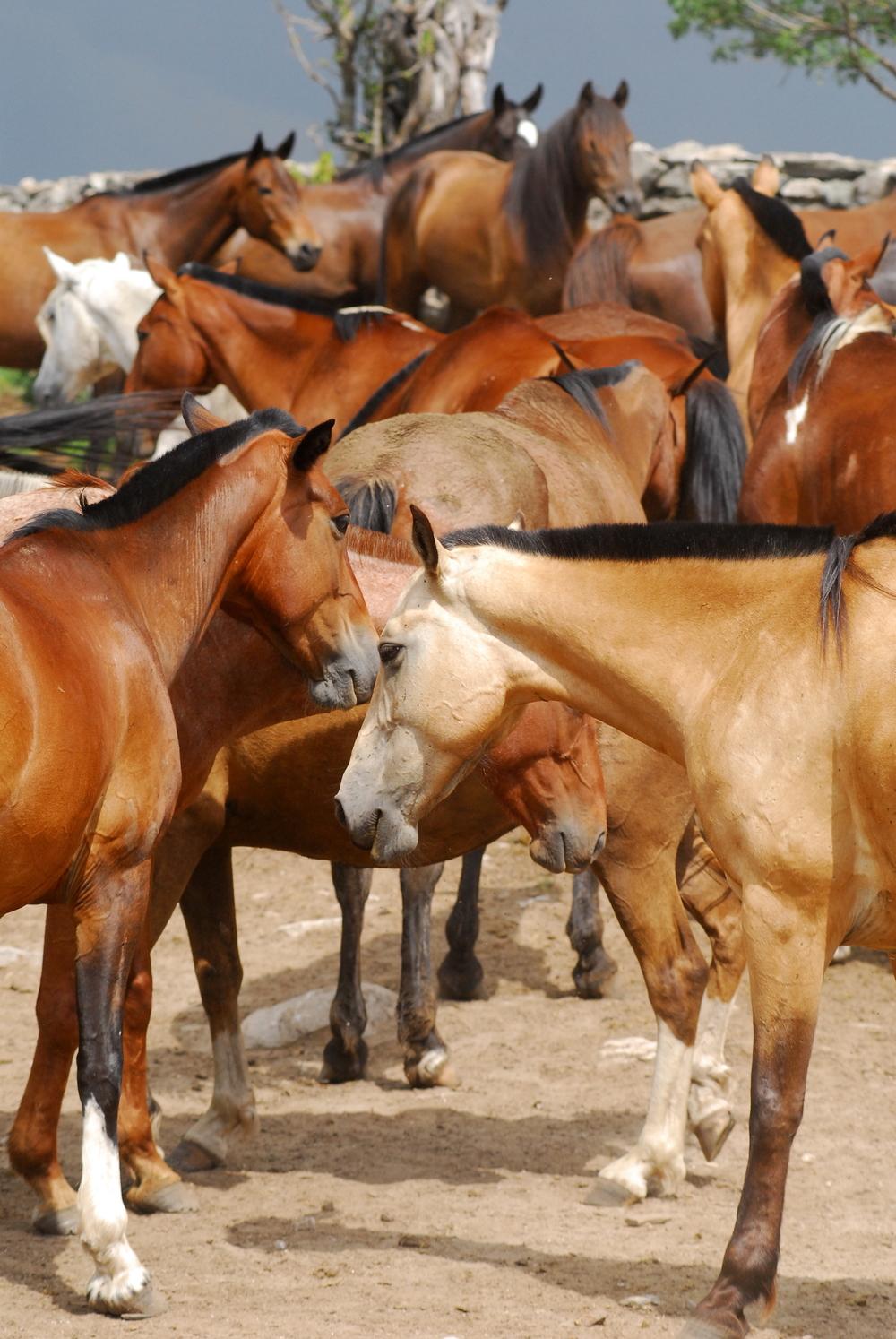 Horses at Estancia Los Potreros  Córdoba