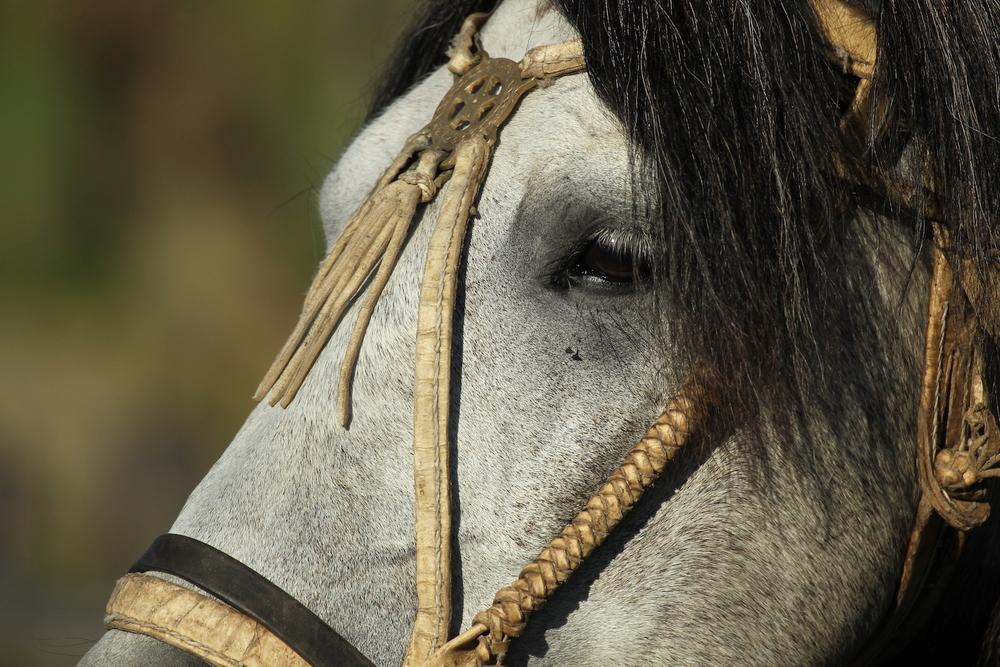 Facon Estancia Los Potreros Horse