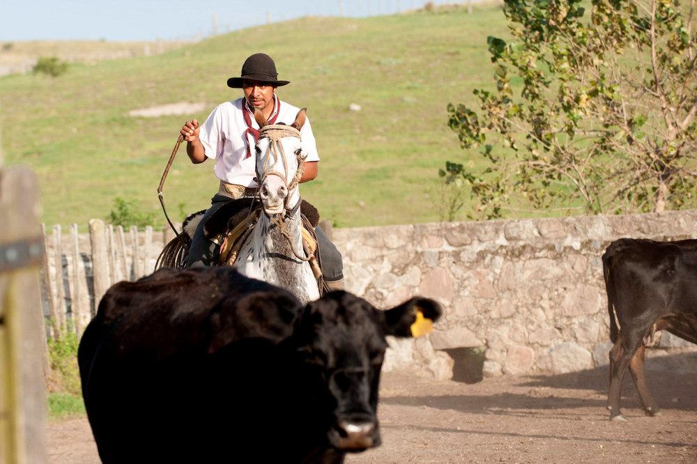 Gaucho on Horseback at Los Potreros