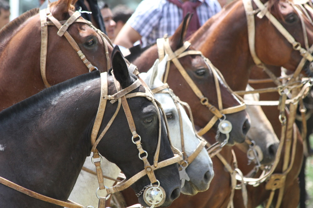 Candelaria horses  Córdoba Argentina