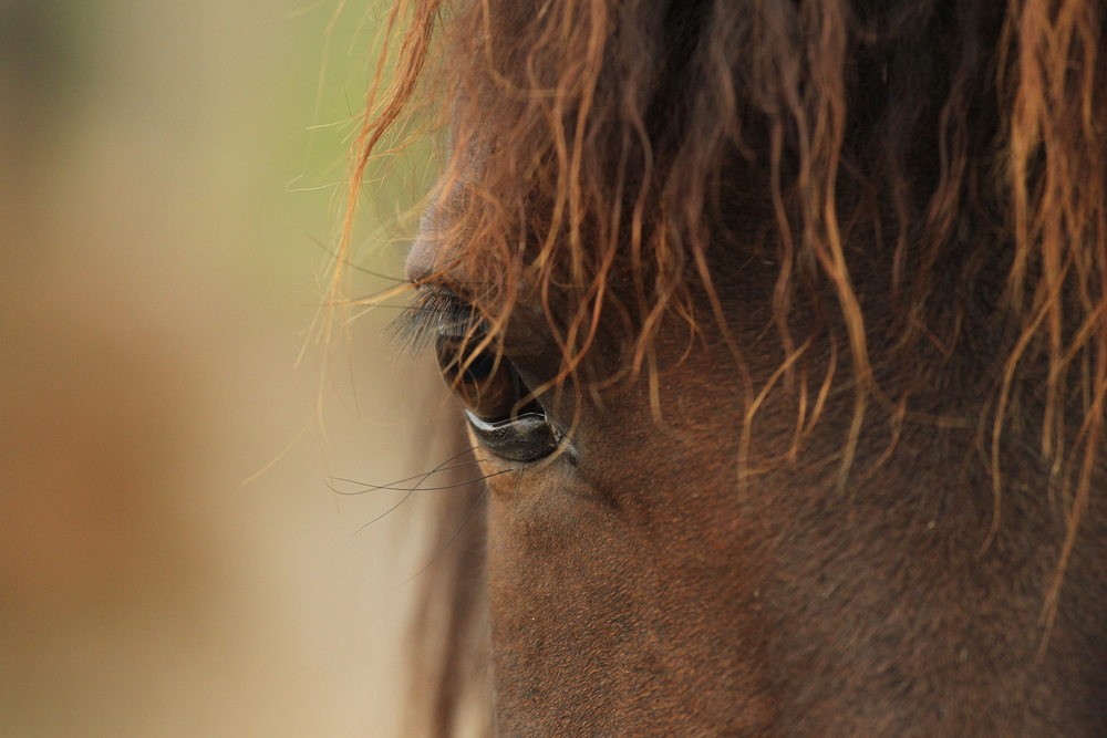 Close-up of Stallion, Los Potreros