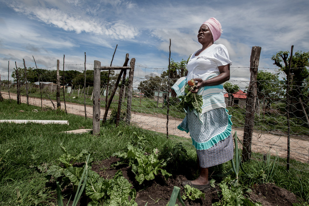 Nqakri Kwana (case study), is a gold medal winner of the 100 meters golden games. Gogo-getters tend to their own gardens as part of the Sisonke project, Border Post, South Africa