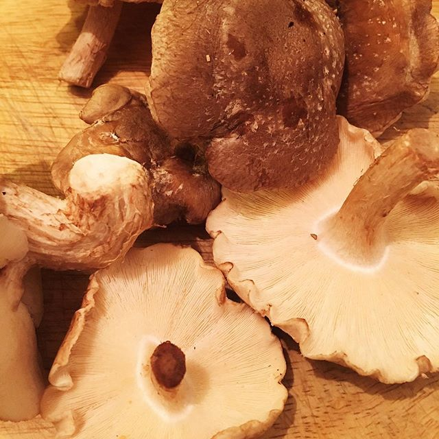 Check out these beauties! Picked up these delicious shiitake mushrooms last night from @planetorganic, fried them up with a tiny bit of olive oil and some finely chopped garlic and OMG were they good! Currently obsessed with all things mushroom - their health benefits are truly incredible. Shitake have high levels of all the B vitamins which makes them great for energy and stamina, they're also a rare food source of Vitamin D and although they probably won't ever replace the sun they make a really useful addition to winter casseroles. They also have antibacterial and antiviral properties which makes them even more perfect for this time of year! So what are you waiting for, get your mushroom on!! #mushroomlove 🍄