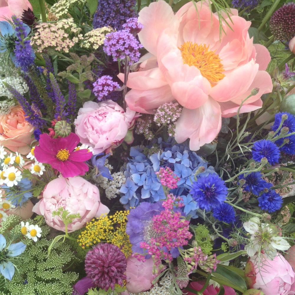 Coral Charm Peony, Cornflowers, Cosmos, Verbena, Blue hydrangea, Oregano, Nigella, Feverfew, Achillea Fennel, Veronica