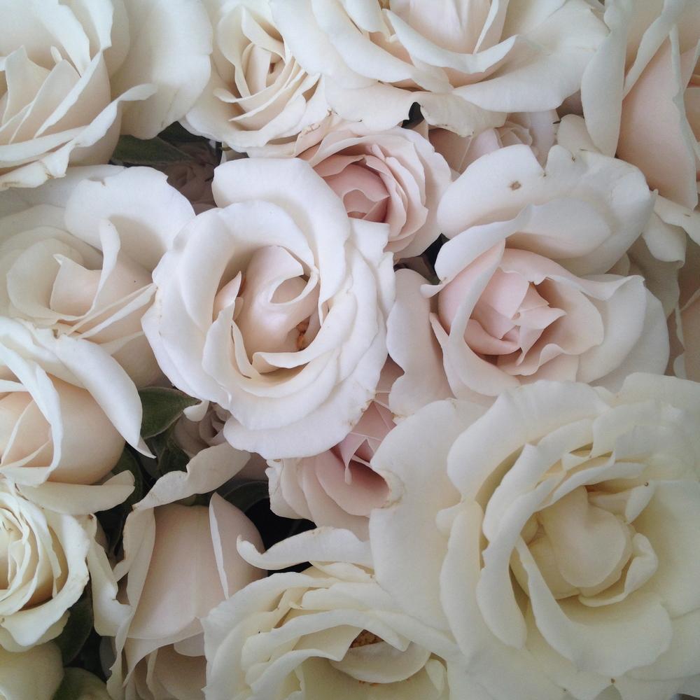 majolika spray roses