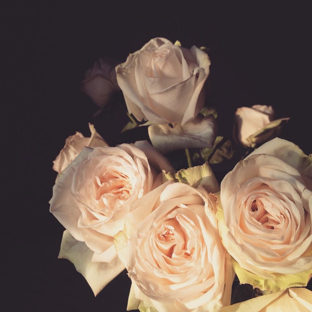 O'hara garden roses