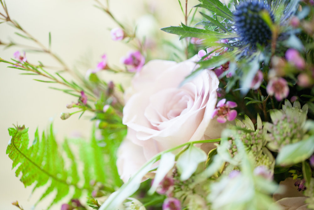 Avalanche roses, thistle & waxflower