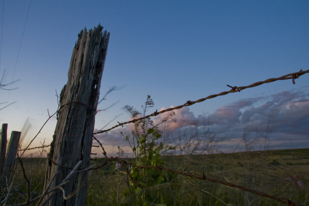 Armstrong Ranch Fence at Dusk
