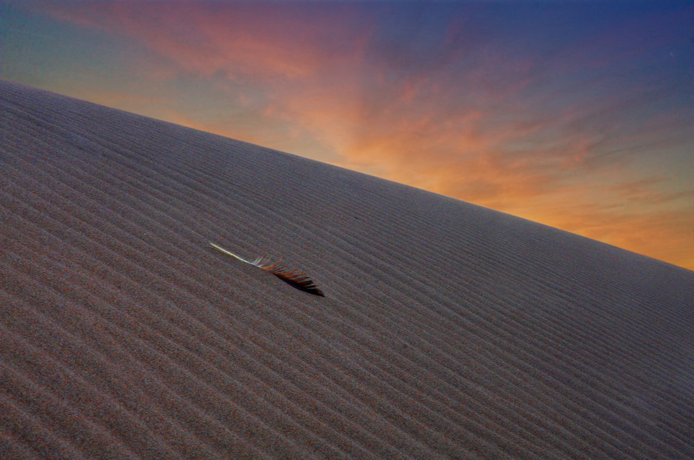 Hawk Feather in Dune at Dawn