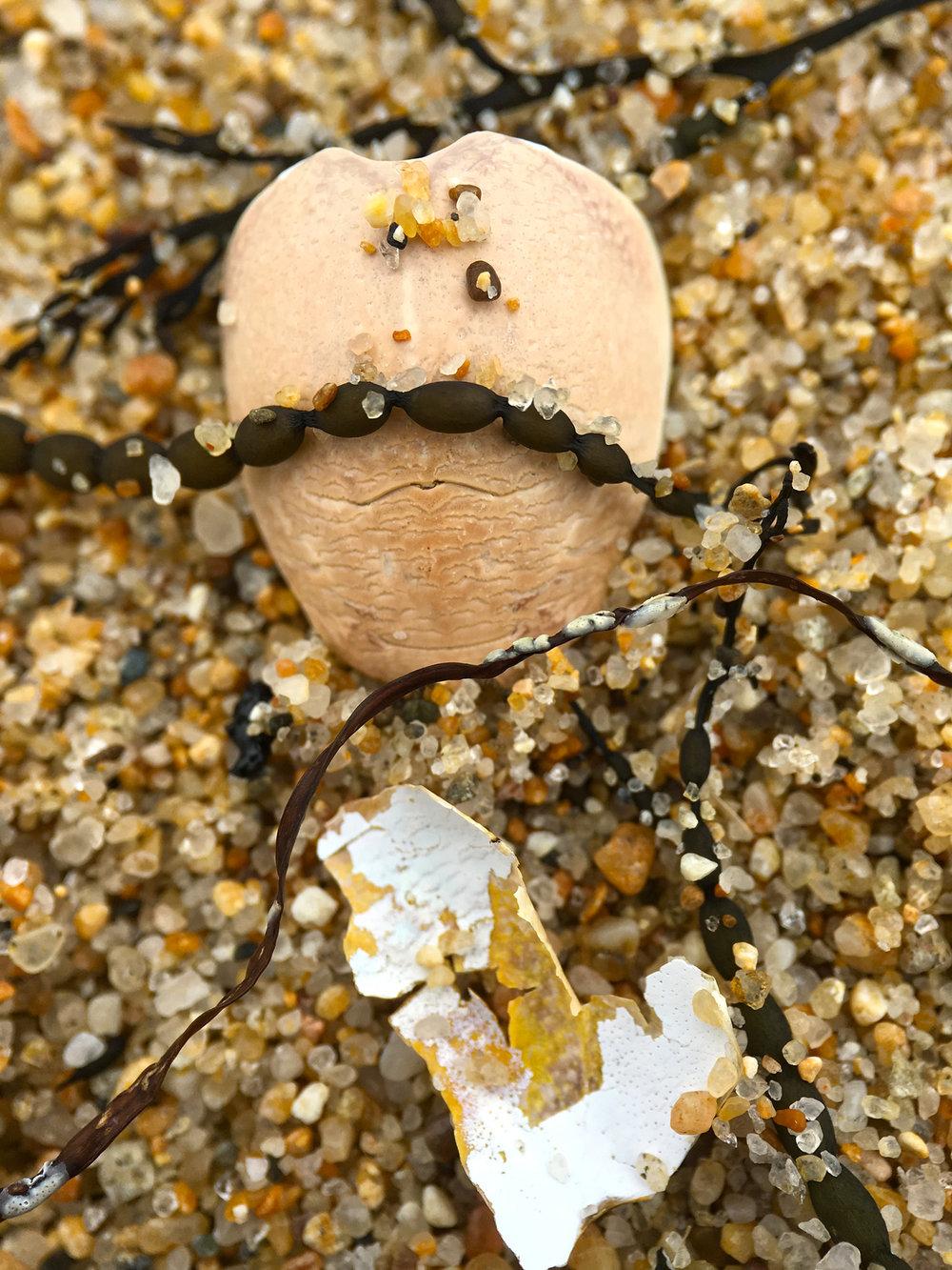Sand Crab Shell