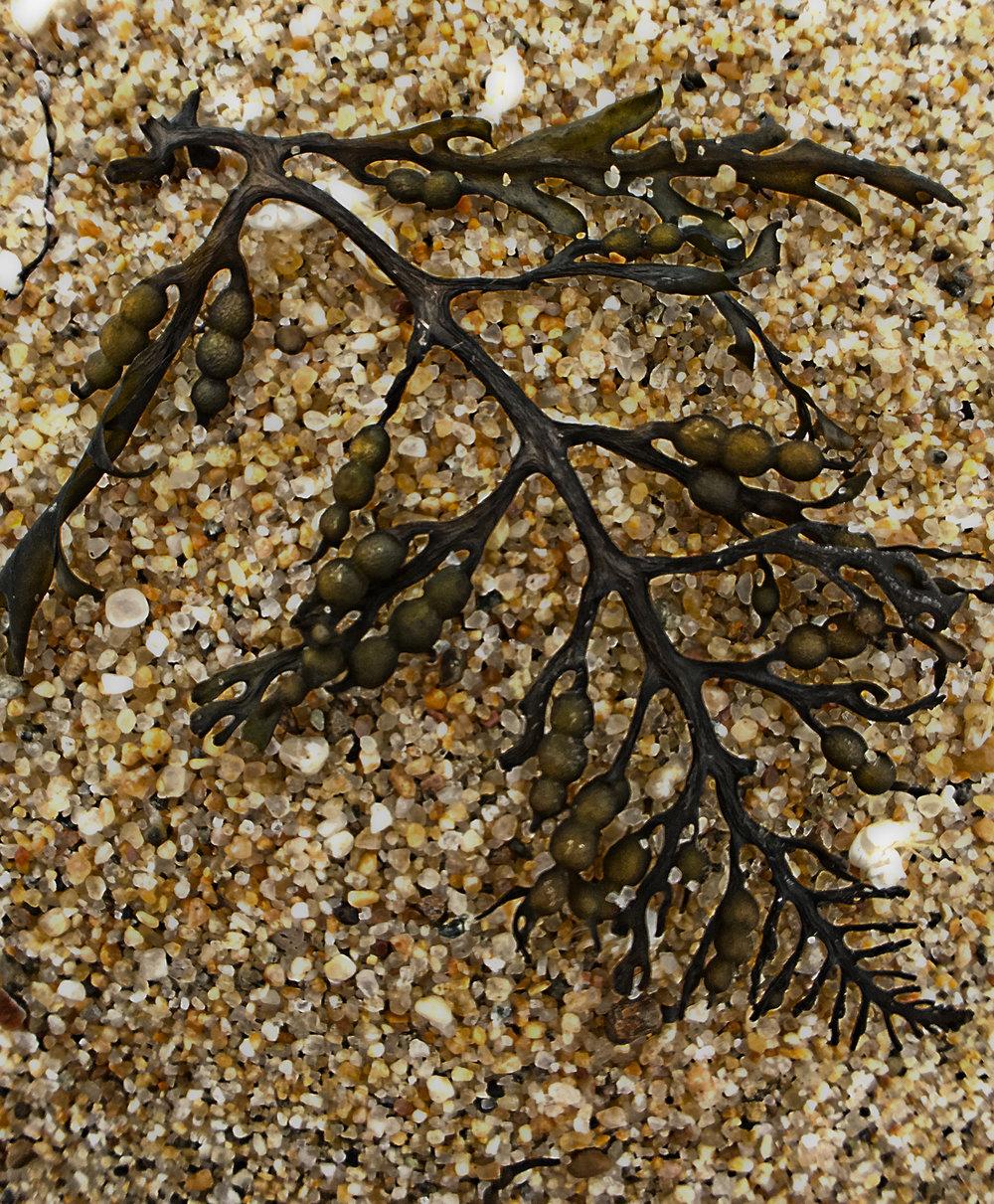 Sand and Sea Life