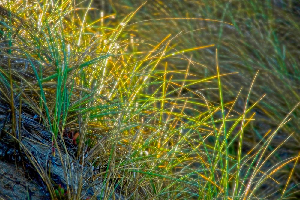 DuneGrass01_1000x667p.jpg