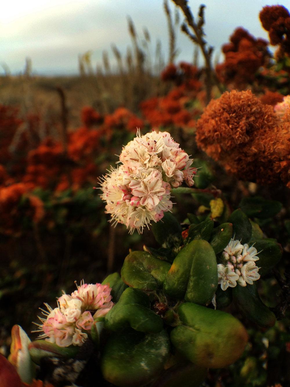 Stilwell Hall Dune Flower