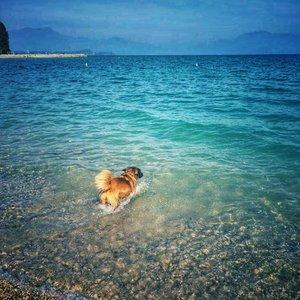 Chelsea having a brave splash in Lake Garda!