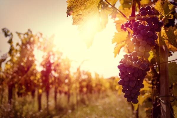 winery-vineyard.jpg