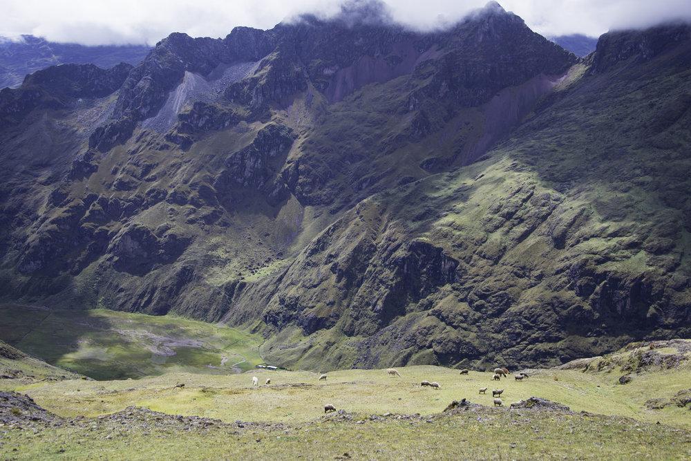 276-Peru-5-15_web.jpg