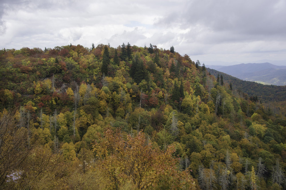 Colorful Fall Foliage in Smoky Mountains on Blue Ridge Parkway