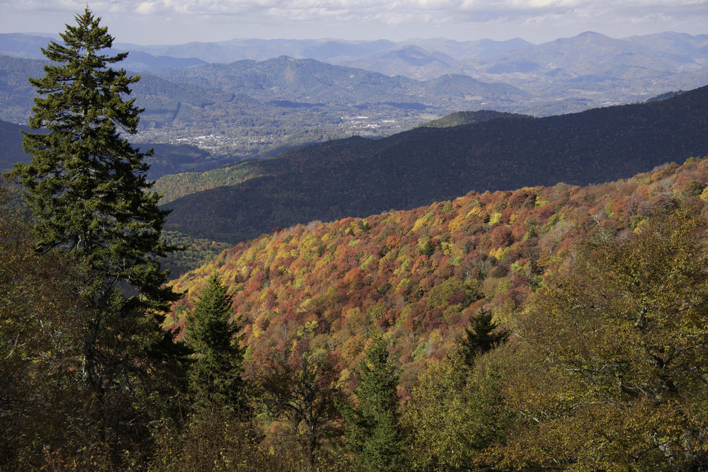 Sunlight on Fall Foliage in Smoky Mountains on Blue Ridge Parkway