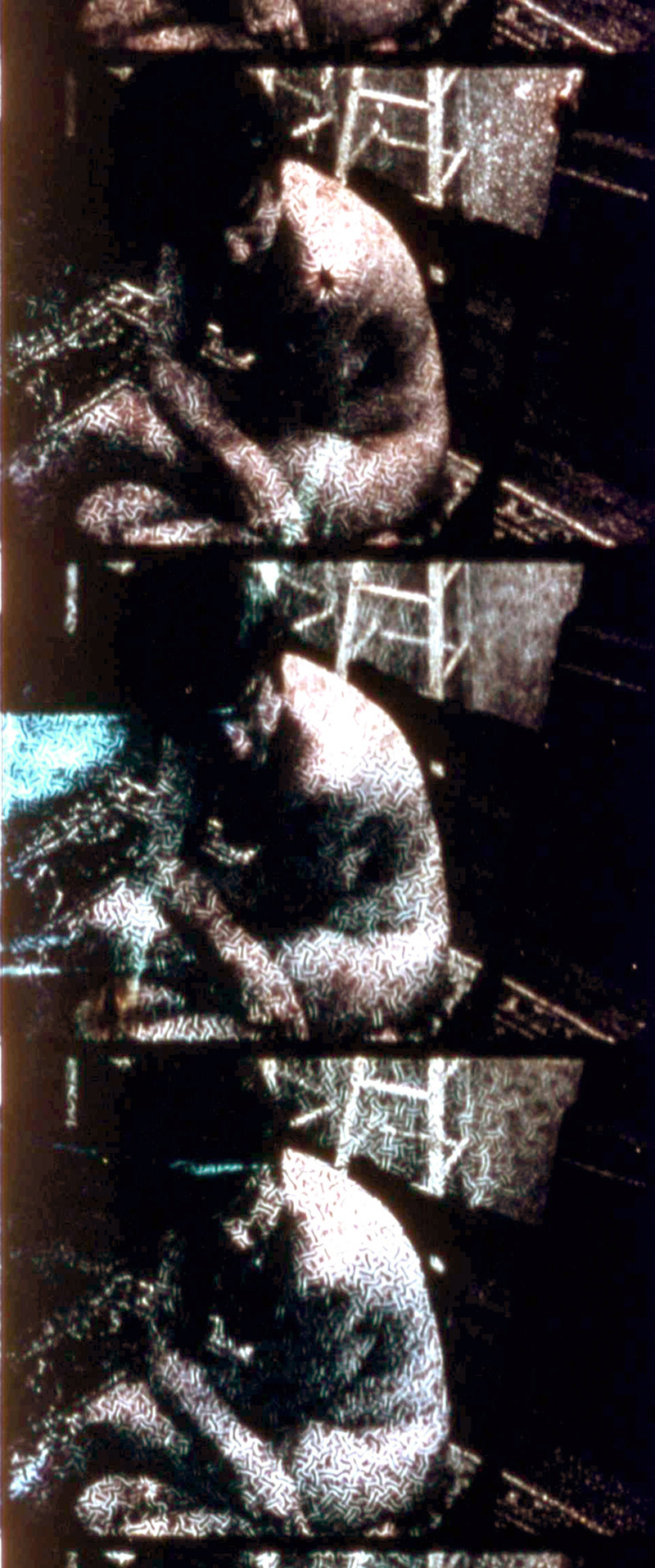 Bruce Elder <Eros and Wonder> - Canada, 2002, Color, Opt, 104min, 16mm2008년 5월 13일 국내 최초 상영