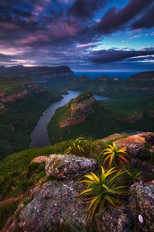 "The Blyde River Canyon is the worlds largest ""green"" canyon, meaning the largest canyon with flora growing inside. It hosts many amazing species, including aloes growing on the edges of cliffs seen here on a mid-summer evening."
