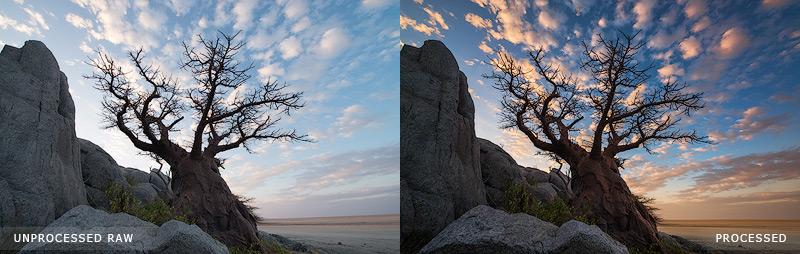 Baobab Trio